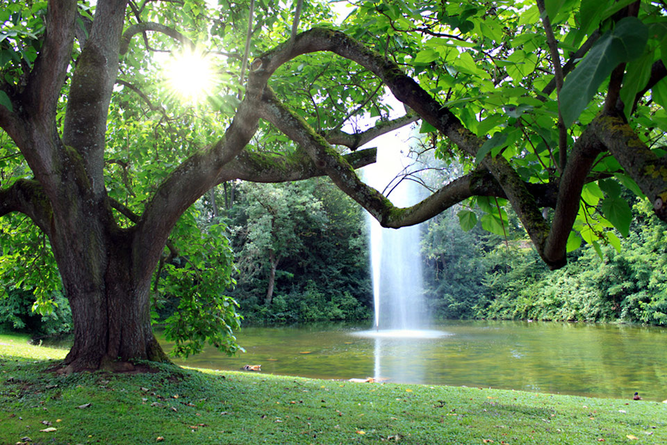 Ein Baum an einem Teich