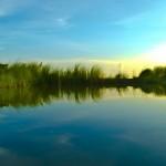 Ein ruhiger See mit Schilf