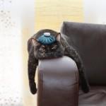 Eine Katze auf einem Sofa